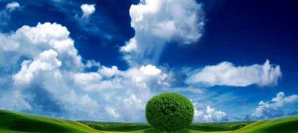 beautiful sky tree wallpaper.preview